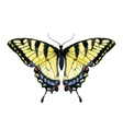 Watercolor hand drawn butterfly vector image