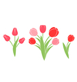 Bunch of flowers Tulip vector image