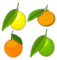 citrus fruits colored hand drawn sketch vector image