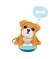 little puppy with big eyes sits near empty bowl vector image