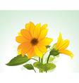 yellow flower in bloom vector image vector image