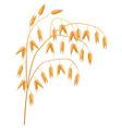 oats vector image
