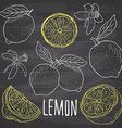 Lemon sketch set Hand drawn doodles lemon fruits vector image