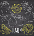 Lemon sketch set Hand drawn doodles lemon fruits vector image