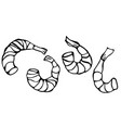 Set of cooked shrimps seafood prawn vector image