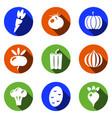 vegetables icons set modern solid symbol vector image