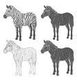 set of with zebra vector image