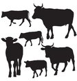 Cow set drawing with floral ornament decoration vector image