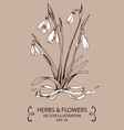 Snowdrops white bow vector image