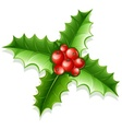 holly green leaves and red vector image vector image