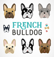 Colorful French Bulldog Collection vector image