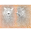 Leopard pattern with head stock vector image