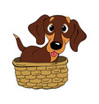 dachshund dog breed vintage vector image