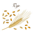 rye ear and grains vector image