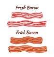 fresh and fried bacon cartoon flat style vector image