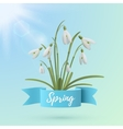 Spring background template with snowdrop flowers vector image