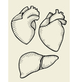 A set of human hearts vector image