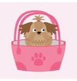 Little glamour tan Shih Tzu dog in the bag vector image