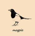 Magpie sketch bird magpie vector image
