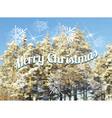 Christmas fir background mesh vector image