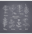 Set of hand drawn spicy herbs on chalkboard vector image
