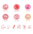 Set with different floral icons vector image