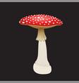 fly agaric mushroom isolated on black background vector image