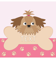 Little glamour tan Shih Tzu dogs head and big bone vector image