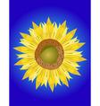 single sunflower head vector image