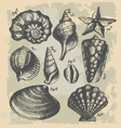 vintage drawing of sea shells vector image