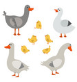 set of cute geese set of cute geese vector image