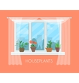 House plants in pots on window with a curtain vector image