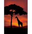 African Sunset background with giraffe vector image