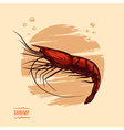 Shrimp Hand draw vector image