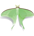 Butterfly Artemis on white vector image