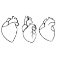 A set of human hearts vector image