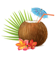 Coconut drink vector image