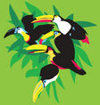 toucans in palm leaves vector image vector image