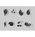 leaves and fruit icons vector image