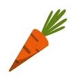 Isolated carrot vegetable design vector image
