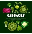 Cabbage vegetable poster for food design vector image