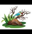 A bird at the branch of a tree vector image