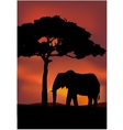 African Sunset background with elephant vector image vector image