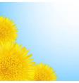 Flowers Dandelion Border vector image