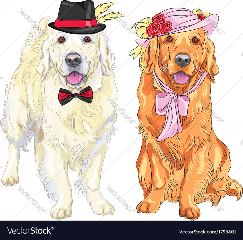 Hipster pair of dogs labrador vector