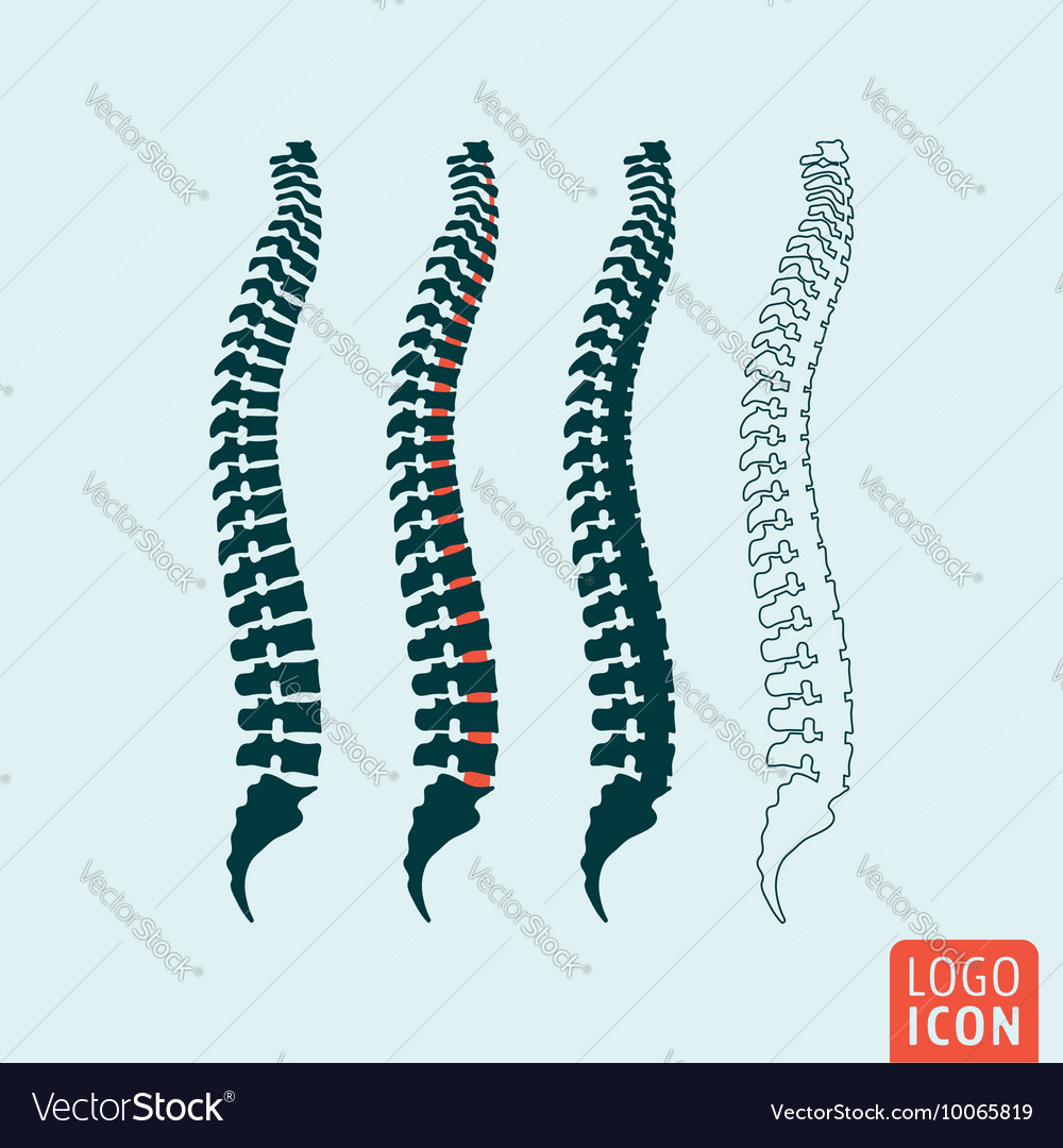 Human spine icon vector