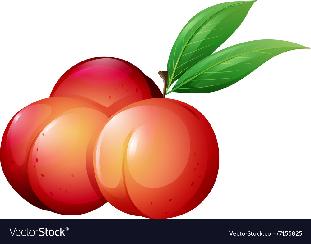 Fresh peaches with green leaves vector