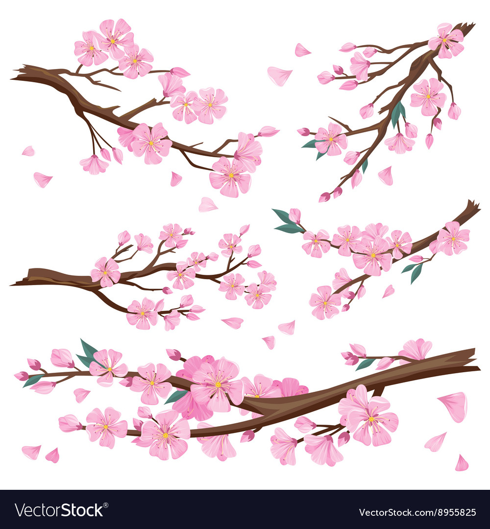 Realistic sakura japan cherry branch vector