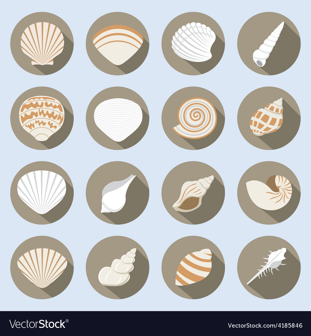 Sea shell flat icons set vector