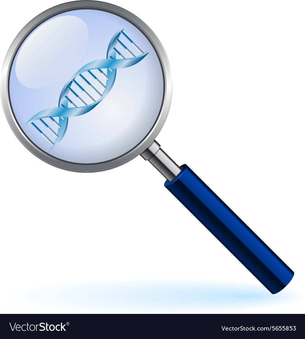 Silver loupe with dna on the white background vector